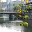 大岡川と橋の風景 大橋 玄