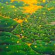村上佳苗:みかん山 - 故郷の大三島と土着をテーマに描いています。【130.3cm×89.4cm/油彩、キャンバス】