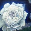 【船岡 和代/Kazuyo Funaoka - ひかり/hikari】モチーフは、ガーデニングショウで見たバラです。会場はバラの香りで満たされていて、とても美しい空間でした。美しい物を見て、とても幸せな気持ちになったので、幸せな気持ちを自分なりに表現しました。2012年女子美術大学芸術学部洋画学科卒業〈530×455mm /油絵〉